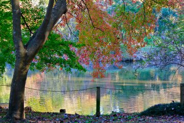 <p>The duck pond is surrounded by glorious trees</p>