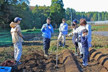 <p>The Weekend Farmers Club volunteers will happily educate you on how to harvest the vegetable in season</p>