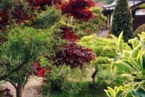 Подобные садики делают Хаякаву очаровательной деревенькой