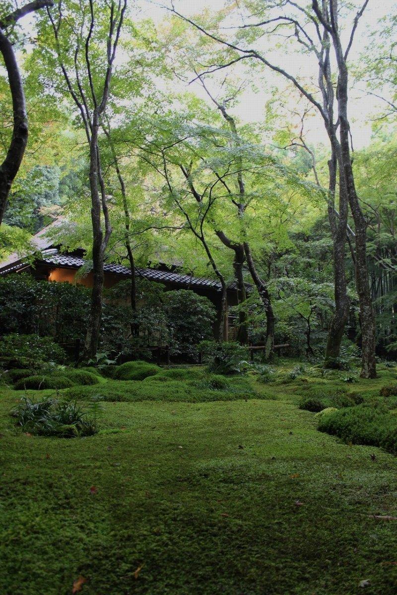 <p>The beautiful green moss of&nbsp;Gio-ji Temple&nbsp;</p>