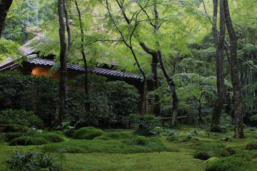 祇王寺の美しい青苔の庭園
