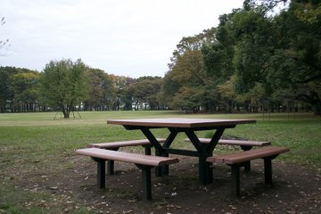 <p>Who&#39;s in for a picnic?&nbsp;</p>