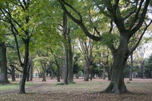 Part of Koganei Park
