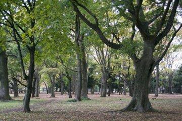 <p>Part of Koganei Park</p>