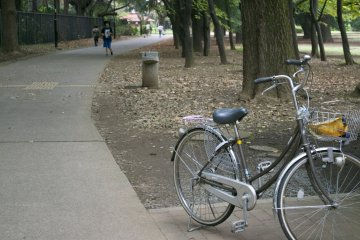 <p>Why not cycle through the park on a sunny day?</p>