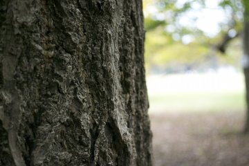 <p>Details: The park has some lovely trees</p>
