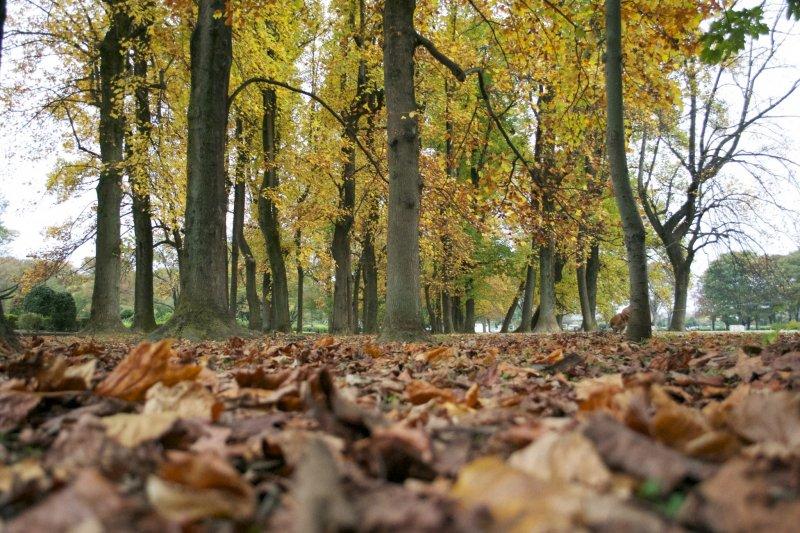 <p>Autumn leaves</p>