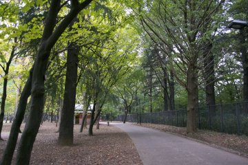 <p>Walking through the paths of the park</p>