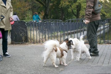 <p>Take your dog to the park and he/she will definitely make some new friends</p>