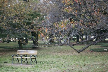 <p>Out jogging at Koganei park? Catch your breath on one of the park&#39;s benches</p>