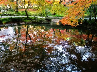 Осенние листья отражаются на водной поверхности пруда Сейрюти