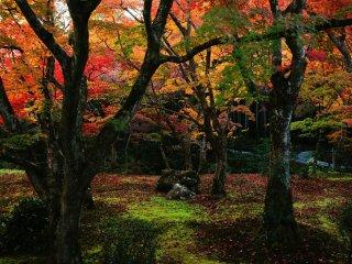 Так как этот сад находися в тени от холмов восточного Киото, для солнечного света требуется больше времени, что бы проникнуть сюда.