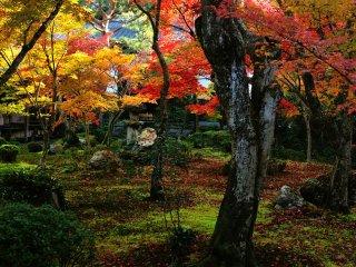 В центре Сада Дзю-гю, где опавших листьев на земле меньше, чем во всем остальном саду.