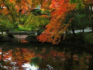 Кленовые листья нависают над прудом Сейрюти, как если бы они были живыми существами, нападающими на пруд!