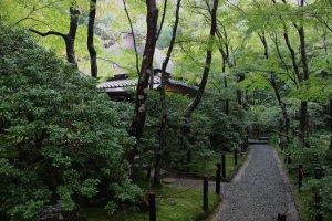 紅葉の名所である小倉山であるが、紅葉でなくても緑の葉の輝きは十分美しい