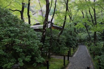 <p>Mt. Ogura is famous for its autumn leaves, but that&#39;s not all you&#39;ll find. The area is full of lush greenery&nbsp;</p>
