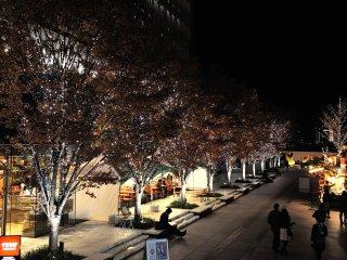 輝く並木道