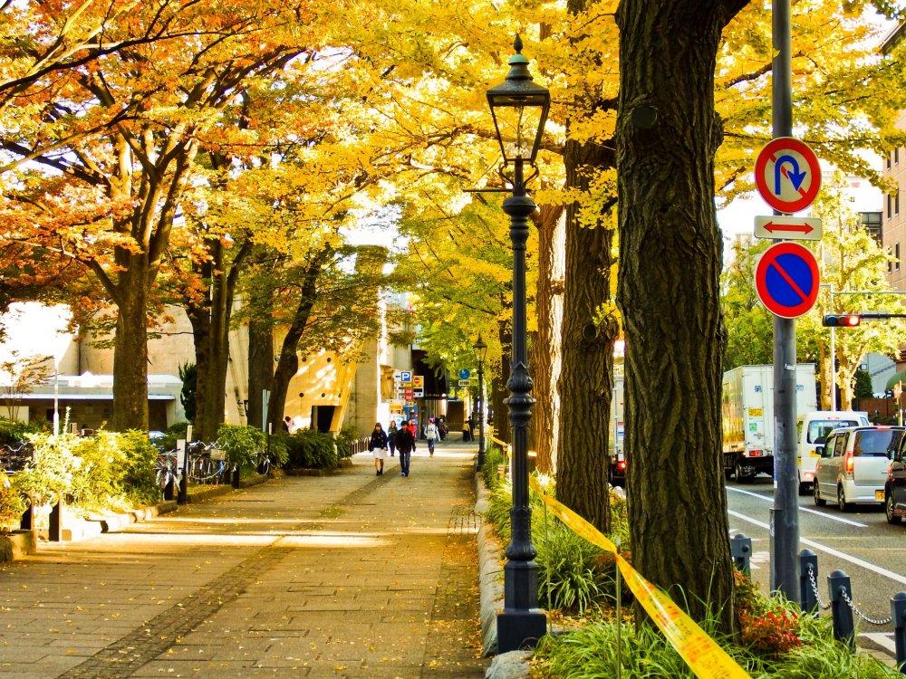 The bright yellow colors as you walk toward Yamashita Park's Motomachi end along Yamashita-Dori