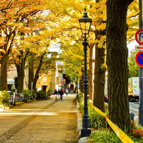 Autumn Colors at Yamashita Park