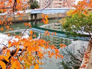 Cầu Koganecho là một trong nhiều điểm dọc theo con sông nơi bạn có thể sẽ được chiêu đãi một khung cảnh đầy màu sắc