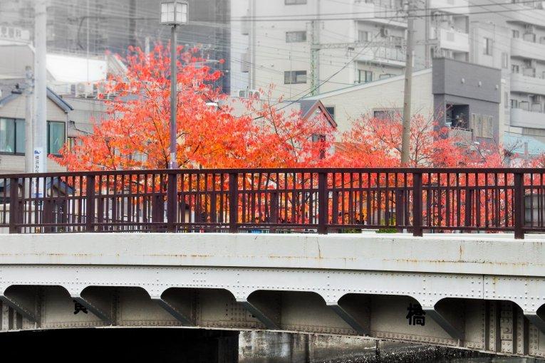 오오카가와 강가의 가을