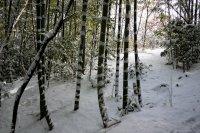 Đi bộ vào buổi sáng mùa đông