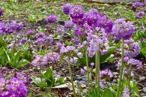 Flowers along the lake are plentiful.