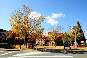 Kontras antara birunya langit dengan daun-daun yang berwarna kuning kemerahan khas musim gugur