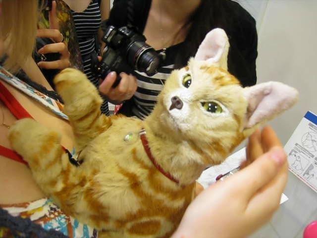 Когда мы взяди кошку на руки, она начала активно реагировать на нас