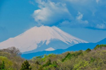 View of Mt Fuji from nearby Oike Park
