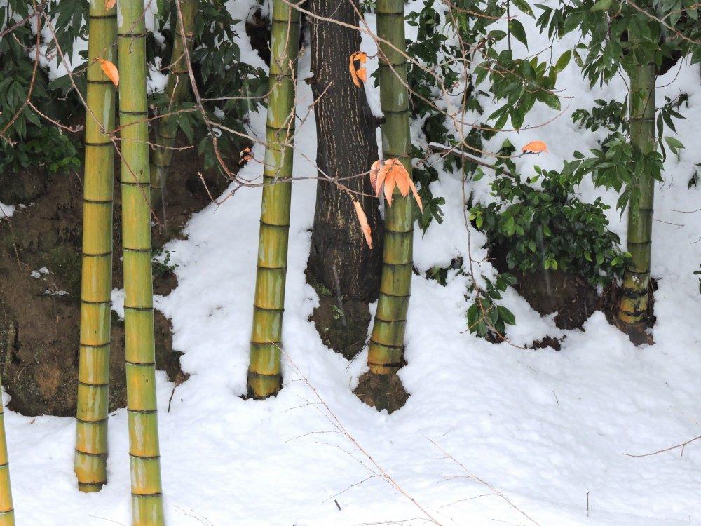 지조묘지는 대나무 숲의 기슭에 위치해 있다
