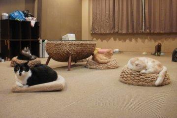<p>Коты везде. &nbsp;</p>