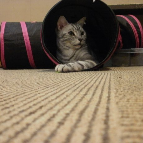 My Cat Neko Cafe in Osu, Nagoya
