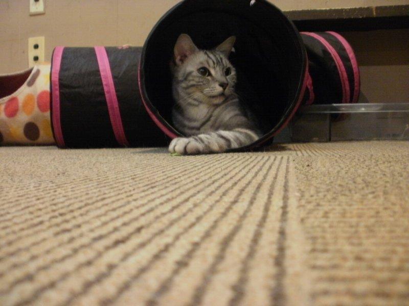 <p>Дождик выглядывает из тканевого тоннеля. &nbsp;</p>