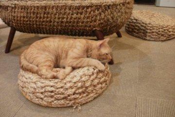 <p>Шаберу лежит на соломенном сидении. &nbsp;</p>