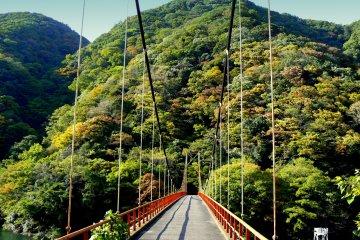<p>A suspension bridge over the river</p>