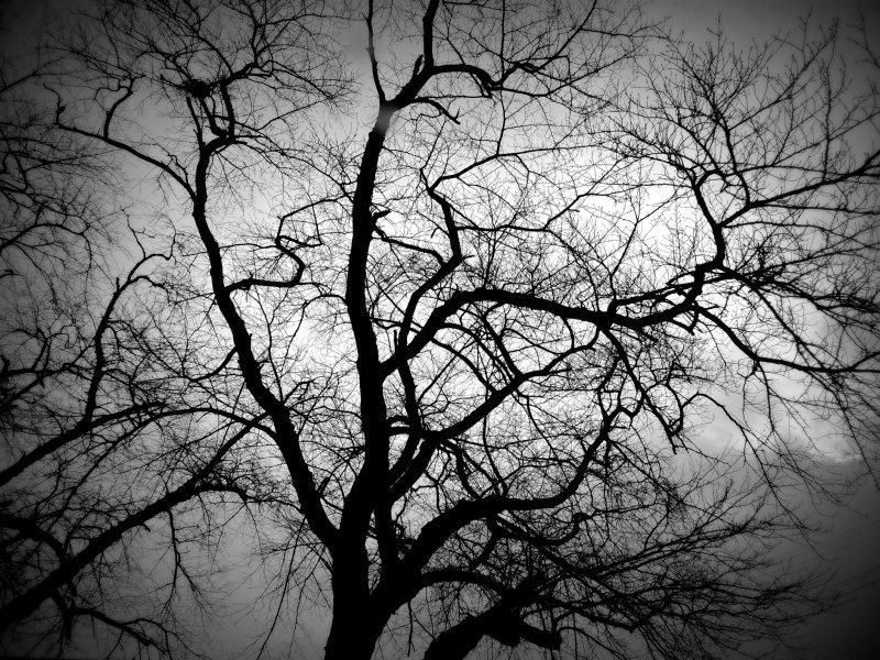 하늘을 향해 가지들을 퍼트리는 벚나무
