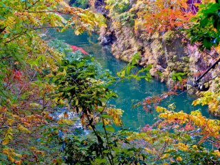 Following the river upstream where you will see some of autumn's colors contrasting against the Tama River