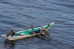 Ngư dân bắt nhím biển