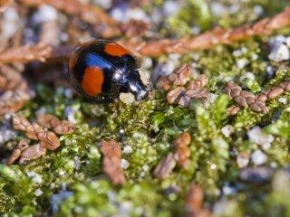 The ladybug out for a walk near the shrine