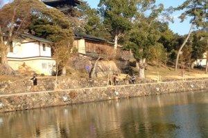 A small pond near Kōfuku-ji