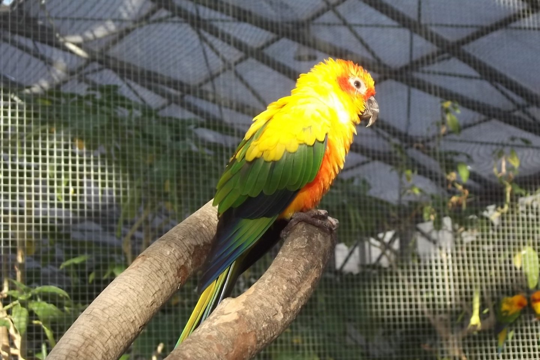 Bright plumage on this little feller