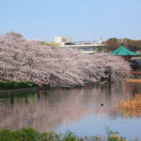 Top 3 des Choses à Faire à Ueno