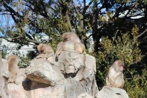 Парочка обезьян на верхушке большого камня