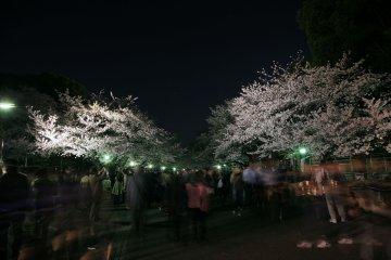 <p>Ночное любование сакурой тоже весьма популярно</p>