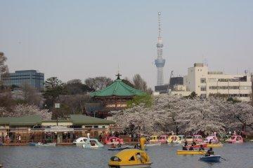 <p>Орендуйте лодку и покатайтесь по пруду, наслаждаясь видом на Токио СкайТри</p>
