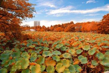 <p>Осенью озеро немного видоизменяется&nbsp;</p>