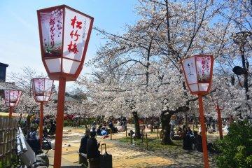 Tempat Melihat Sakura di Kyoto