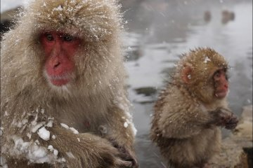 The Hike to Snow Monkey Park Nagano
