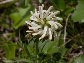 Great variety of wild flowers can be found on this trail
